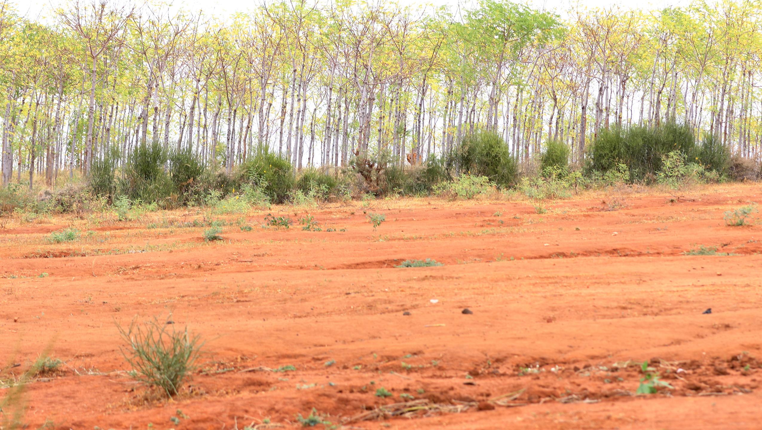 Plantación de árboles en el semidesierto