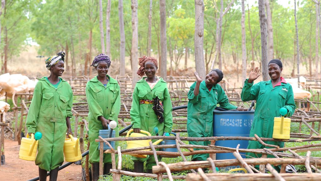 At the plant nursery in Kiambere, 72% of the employees are women.